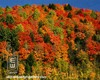 Wood_7685f_butternut_mountain_vermont_ne