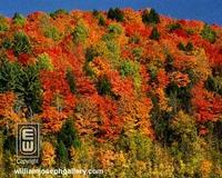 Wood_7685f_butternut_mountain_vermont_ne_4