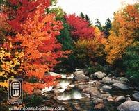 Wood_9001_roaring_river_baxter_state_par